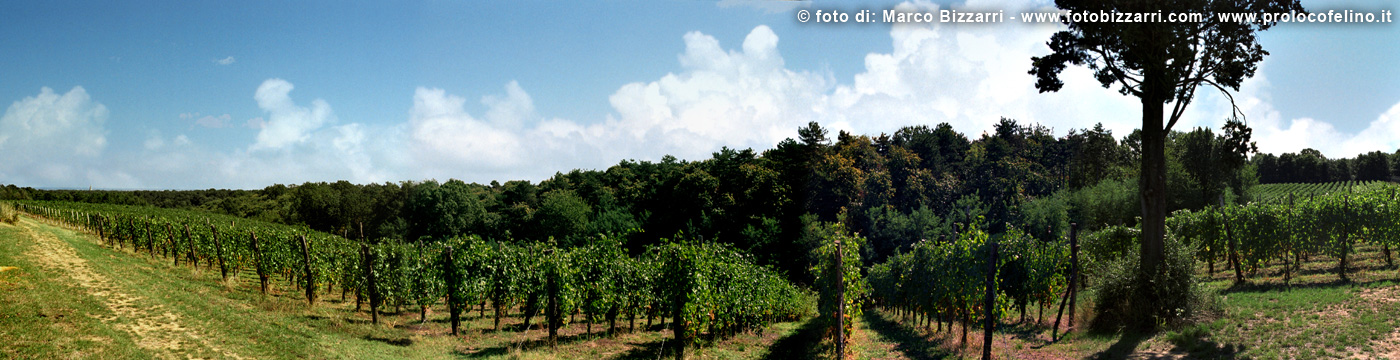 food-valley-prolocofelino-00003
